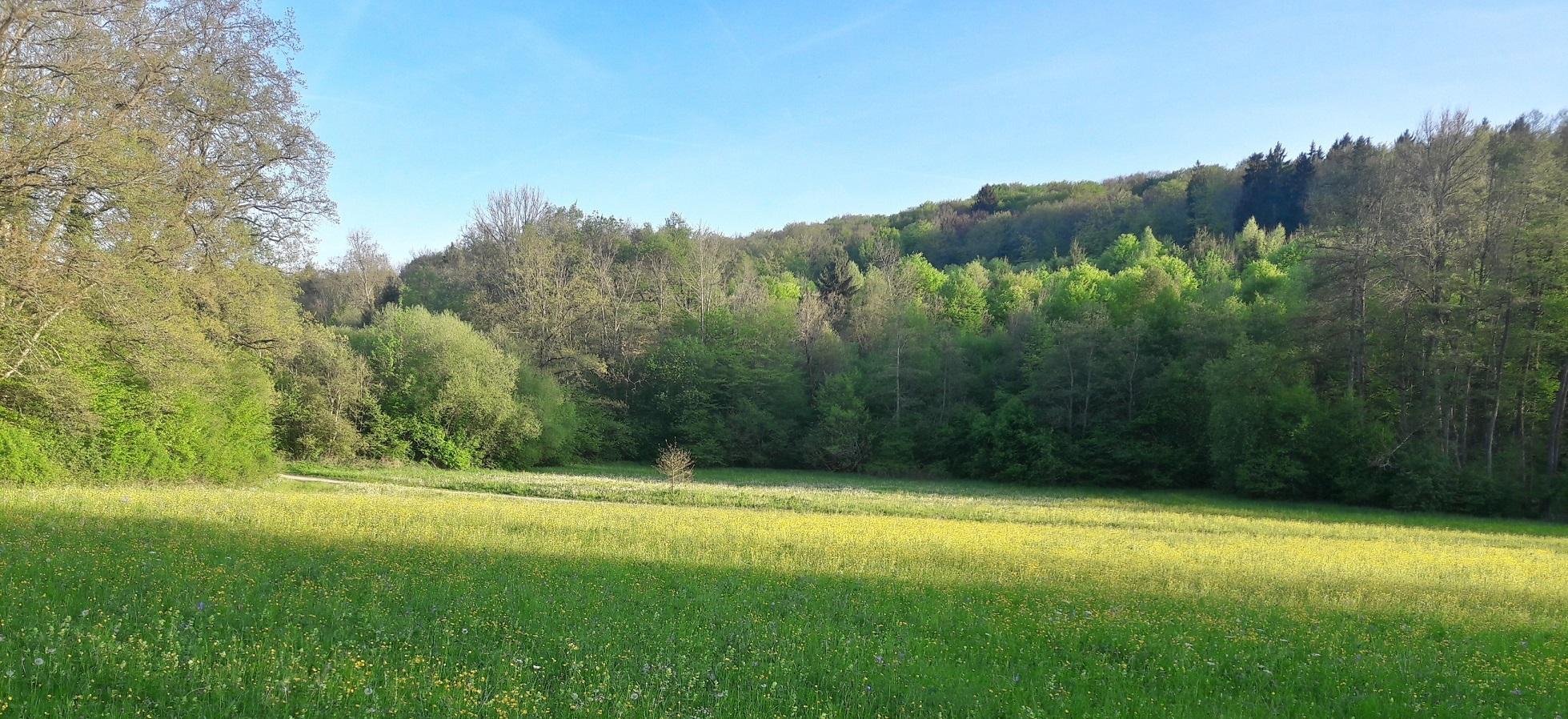 Blick übers Ehrenbachtal