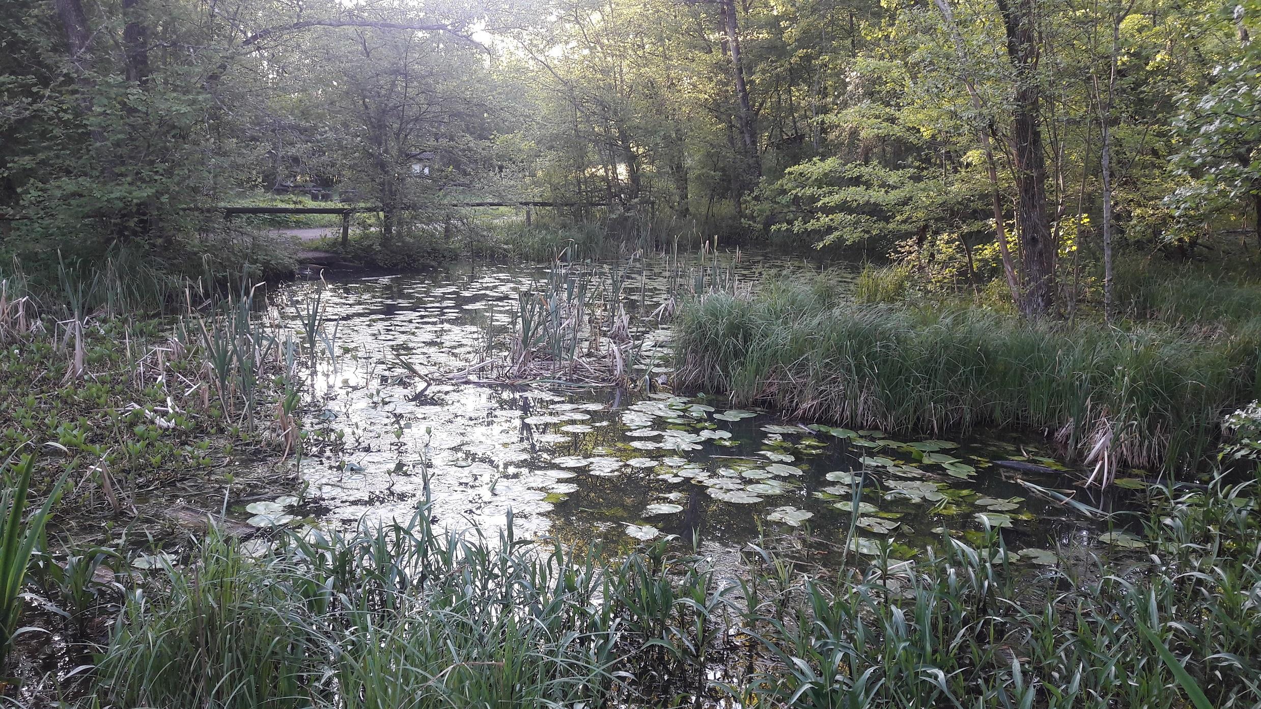 Teich Ehrenbachtal