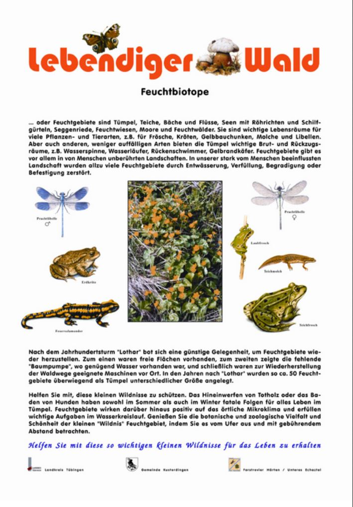 Feuchtbiotope