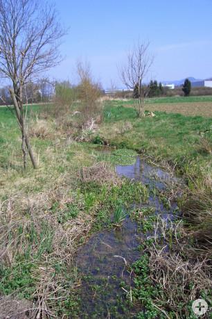 Renaturierung des Brühlgrabens in Mähringen
