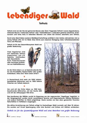 Totholz und seine Nutzen